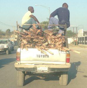 Sugarcane_truck_PAP